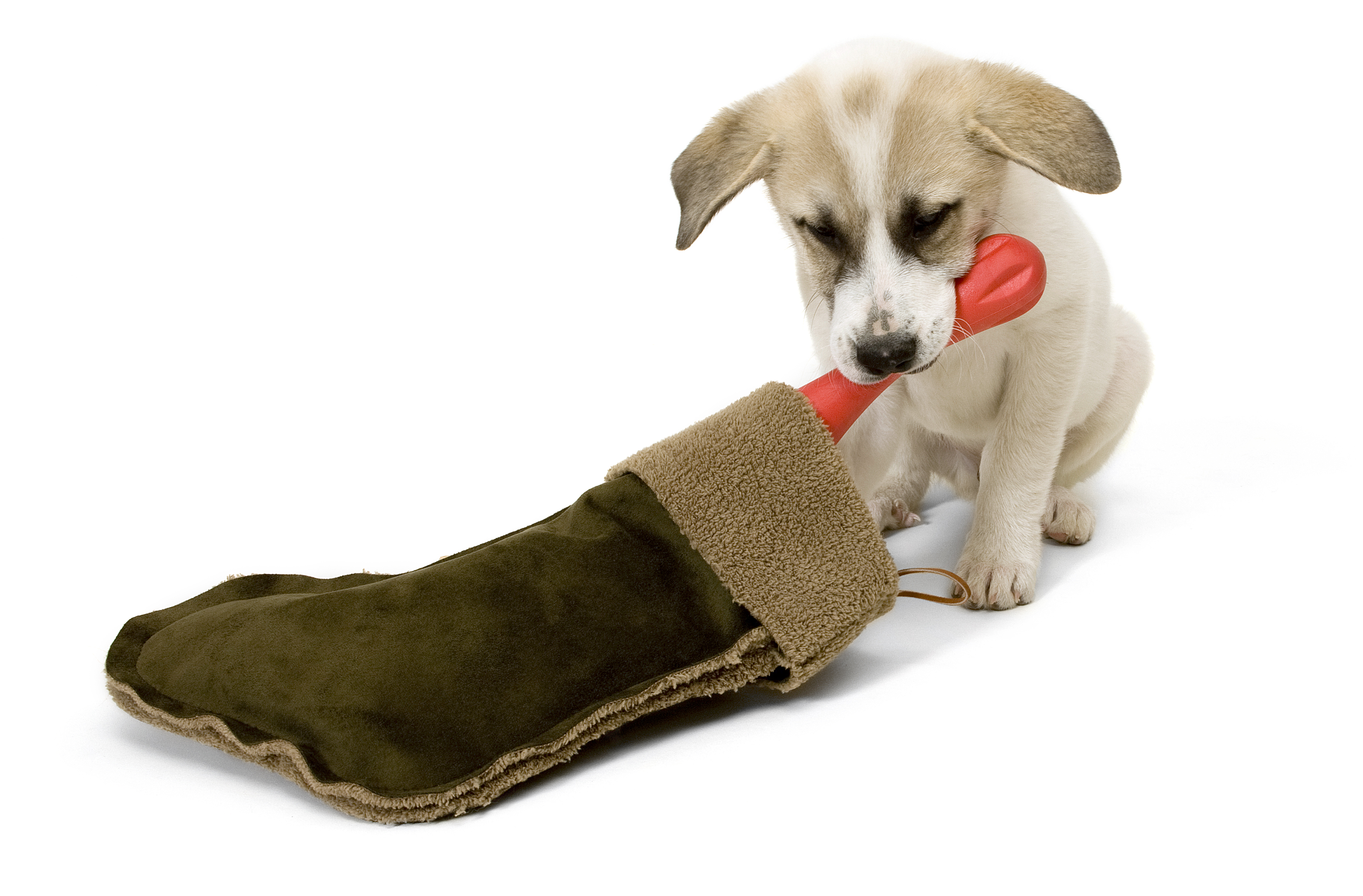 Paw Some Gifts For Pets You Know Your Dog Wants These
